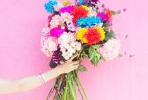 flowers / a bunch of beautiful flowers