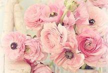 FLOWERS / Flower Power