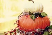 It's Fall Y'all  / by Kate Manshack