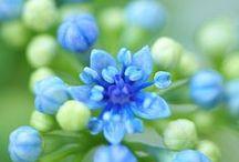 Flowers & Gardens / ...et j'ai réalisé que toutes les fleurs de la création sont belles, magnifiques roses et lys blancs purs voler le parfum de la violette ou la délicieuse simplicité de la marguerite ... Alors ... est dans le monde des âmes, qui est le jardin de Jésus Dieu a voulu créer les grands saints .. mais elle a aussi créé un plus petit, ... La perfection consiste à faire sa volonté, à être comme il veut.(S.Therese de Lisieaux)