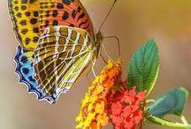 Dei-me suas asas. / Não se deve prender os q tem asas. Asas foram dadas para voar livremente. Quem arrancou as minhas????