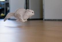 Fast!!!!!!!!!