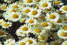 O mundo precisa de flores. / Flores alegram o mundo, é o sorriso da natureza.