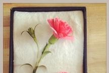 Paper Flora / by Robert Mahar