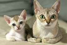 CATS, DOMESTIC / Domestic cats are the second most popular pet in the world, following the dog.