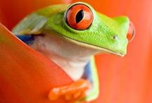 FROGS, TOADS / Frogs and toads are fascinating creatures. Find lots of pictures and blog posts about frogs and toads here.