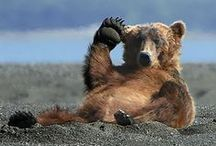 BEARS / Bears are creatures of the wild that you need to be wary of, especially if their cubs are nearby.