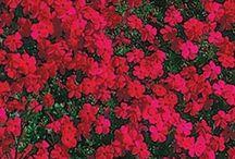 Gardening / by Rebecca Baker