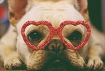 For The Love of Dogs / Sharing the love of dogs and their spirit