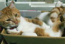 うちの猫 / 我が家の猫の写真を載せていきます。