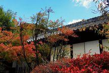 木樹 / 桜や 紅葉や 新緑、それ以外でも、とにかく木を写します。