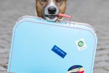 Pet-Friendly Places to Visit / Pet-Friendly Places to Visit is information on places you can take your dog. This will include stores, hotel/motels, parks, restaurants, etc. Plan your vacation in advance, knowing your dog can be included in most of your activivties.