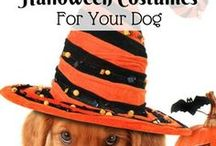 Halloween Costumes for Pets / This is a collection of Halloween costumes for all types of pets. Some are DIY projects and some are store-bought. Either way, you're sure to get lots of ideas for your pets and get a few chuckles along the way.   Email me at jeanne@animalbliss.com if you would like to colaborate with me.