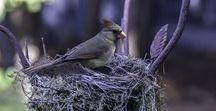 Nests / One's nest, or home, is a universal symbol that marks the creation of life and celebrates the beauty of the divine source.
