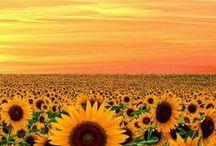 Garden + Flowers / by Jayne Godfrey