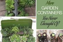 Gardening - Containers / by Patti Craven