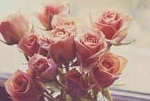 <3 rose <3