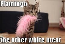 Fun with Flamingos!!