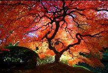 Autumn!!! / by Jan Royston