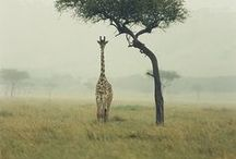 Let's Get Wild! / Some amazing images of wildlife that we love, as seen on many of our adventure travel trips!