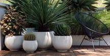 planters + pots