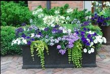 Container Gardens / by Leslie Young