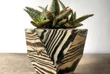 Garden and Indoor Plants ideas / Thank you for sharing your pins! / Repin as many as you want. / by Tamara Llanes