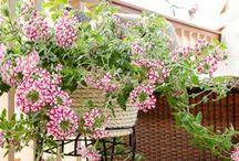 Garden - Plants - Backyard / All Garden, Plants (Indoors and Outdoors) and Backyard DIY's, tutorials and tips