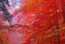 Autumn Scenery/Words / by Janet Griffin