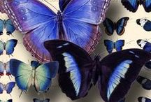 Moths and Butterflies / Thank you for sharing your pins! / Repin as many as you want. / by Tamara Llanes