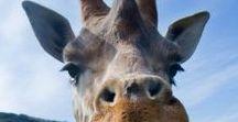 Animals … Lovely / Fotos de animales que te enamorarán