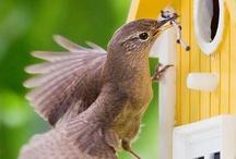 Birds & Birdhouses / by Debbie Ross Kosterman