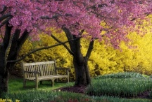 Benches / by Debbie Ross Kosterman