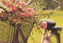 Spring … primavera / Fotografías que te recuerdan la primavera. Ideas de fotos que puedes hacer tú mismo.
