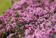 Backyard Flora Inspirations / by Oviya