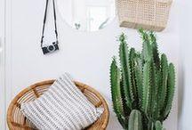Plantas: Cactus / Fotografías de cactus, decorar con cactus, inspiración, cactus bonitos.