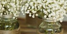 Plantas: Paniculata / Ideas e inspiración para decorar tu casa, un ramo, tu boda… con una de las plantas más bonitas.