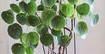 Deco: plantas de interior / Ideas para decorar tu casa con plantas del interior