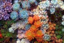 plants / by Heather Johnson