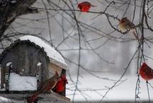 WINTER/SNOW / by Debbie Leon