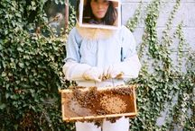 b z z z z / Beekeeping, bees, honey, honeycomb