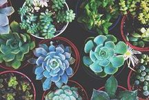 | Let it Grow | / All about the green thumb.