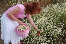 picking flowers up