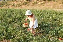 picking fruit / vegetable