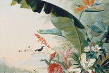 Flore / by la galerie imaginaire