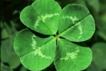 St. Patrick's Day / Recipes | Crafts | DIY | Roundups | Ways to make your St. Patrick's Day more festive.