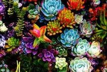 gardens. / by Jodi Hoagland