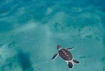 Soft Seas / An undersea adventure!