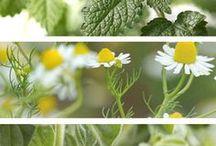 Health and Homeopathy