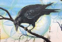 Corvidae (Krage-familien) / Corvidae is a cosmopolitan family of oscine passerine birds that contains the crows, ravens, rooks, jackdaws, jays, magpies, treepies, choughs and nutcrackers.[1][2][3] In common English they are known as the crow family, or, more technically, corvids. There are over 120 species. The genus Corvus, including the jackdaws, crows and ravens, makes up over a third of the entire family.